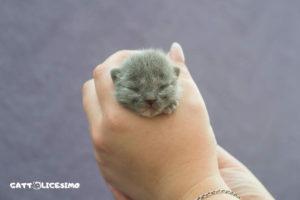 Le più belle foto di gattini appena nati