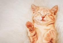 Ecco cosa fare quando adottiamo un gattino
