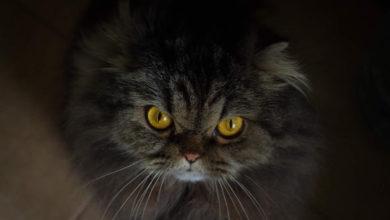Come comportarsi quando il gatto è arrabbiato