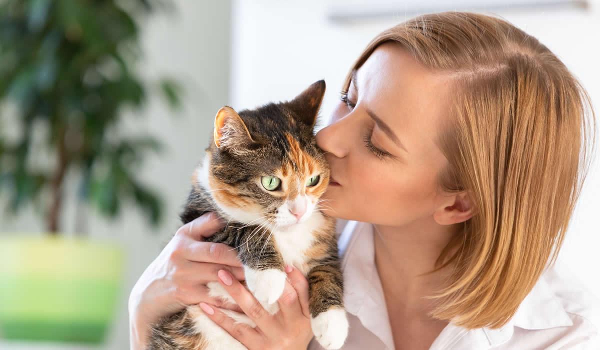 Utili consigli per il gatto che perde tanto pelo