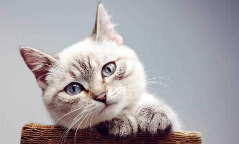 nomi gatti femmine