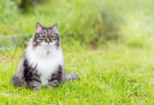 Lista di nomi elfici per i gatti ispirati a Tolkien