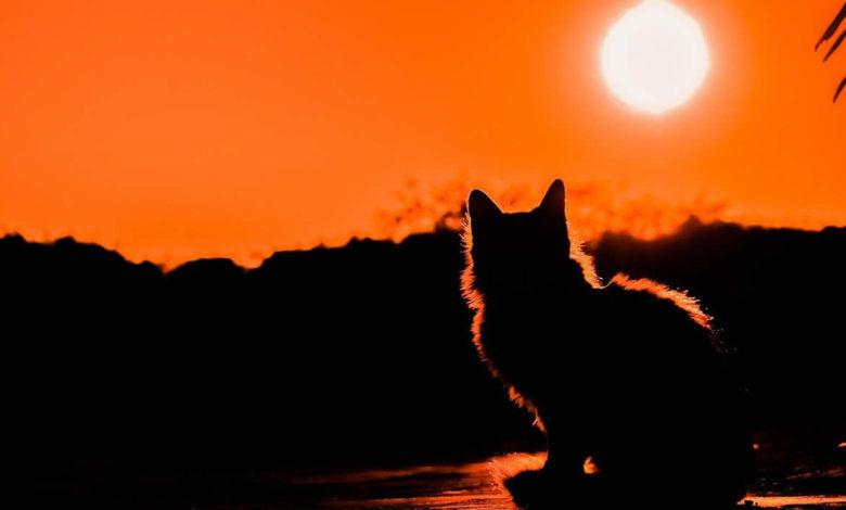 Lista di nomi mitologici da dare a un gatto