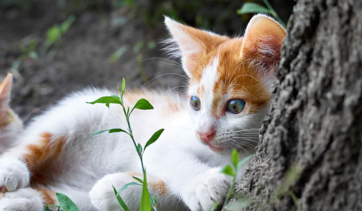 Capire i gatti dal linguaggio del corpo