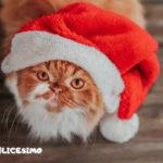 immagini gatti di natale