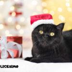 gattini natalizi sfondi