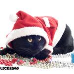 gatti natalizi foto 13