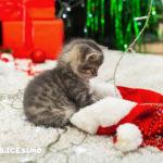 immagini gatti natale