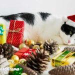 sfondi gattini natalizi