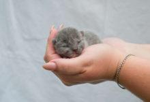 guida su come prendersi cura dei gattini appena nati