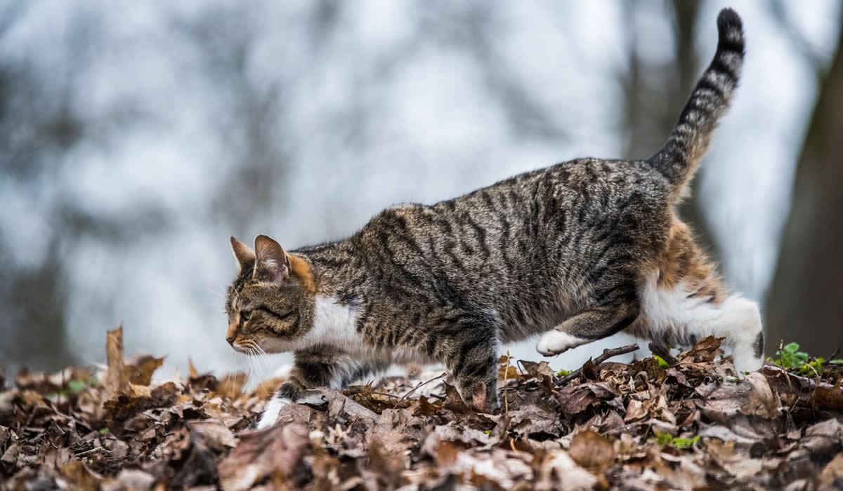 Consigli per addomesticare un gattino selvatico