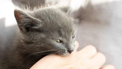 Cosa fare di fronte a un gatto aggressivo o nervoso