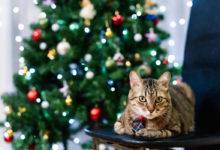 Come fare l'albero di Natale in una casa dove vive un gatto