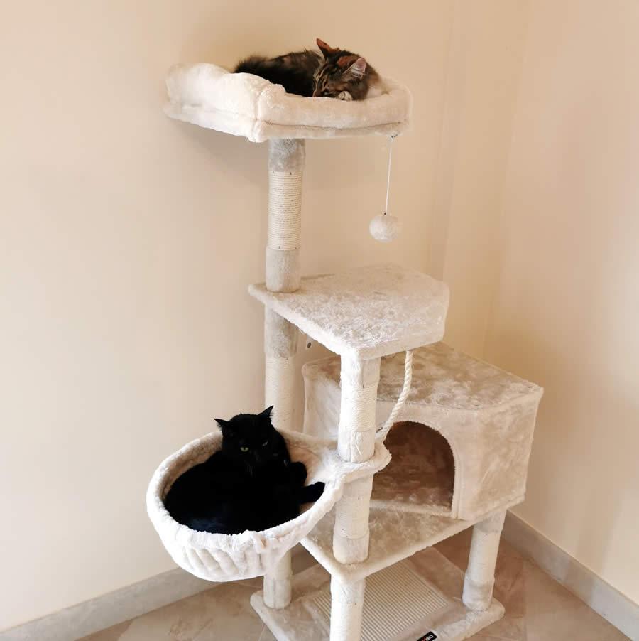 le nostre gatte hanno gradito il nuovo trespolo