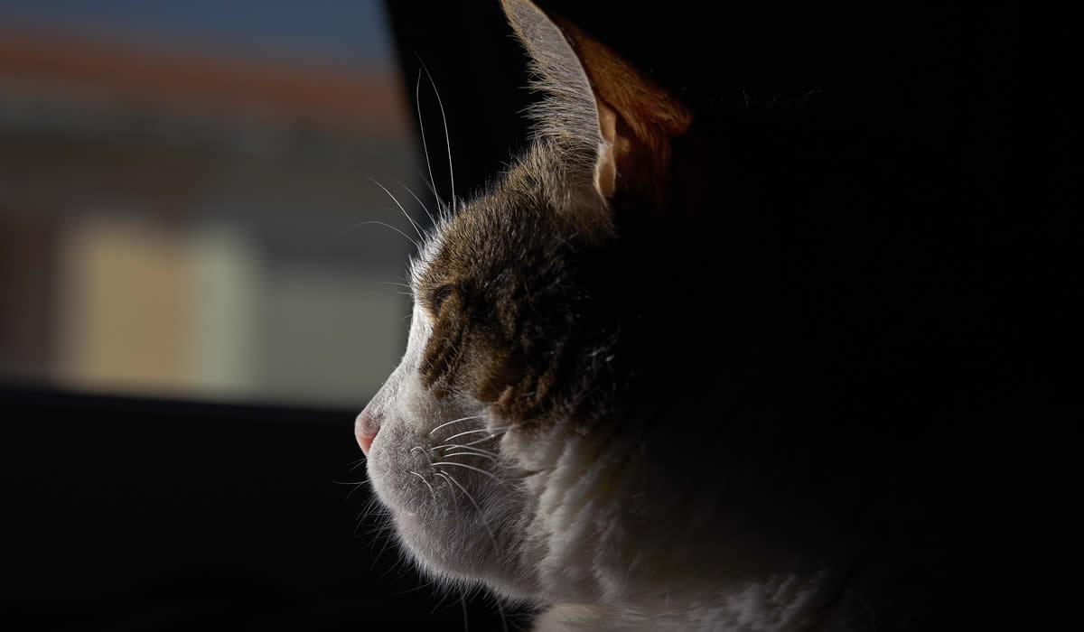 Qualche consiglio utile per affrontare la perdita del gatto