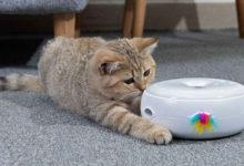 Un divertente gioco per gattini da appartamento
