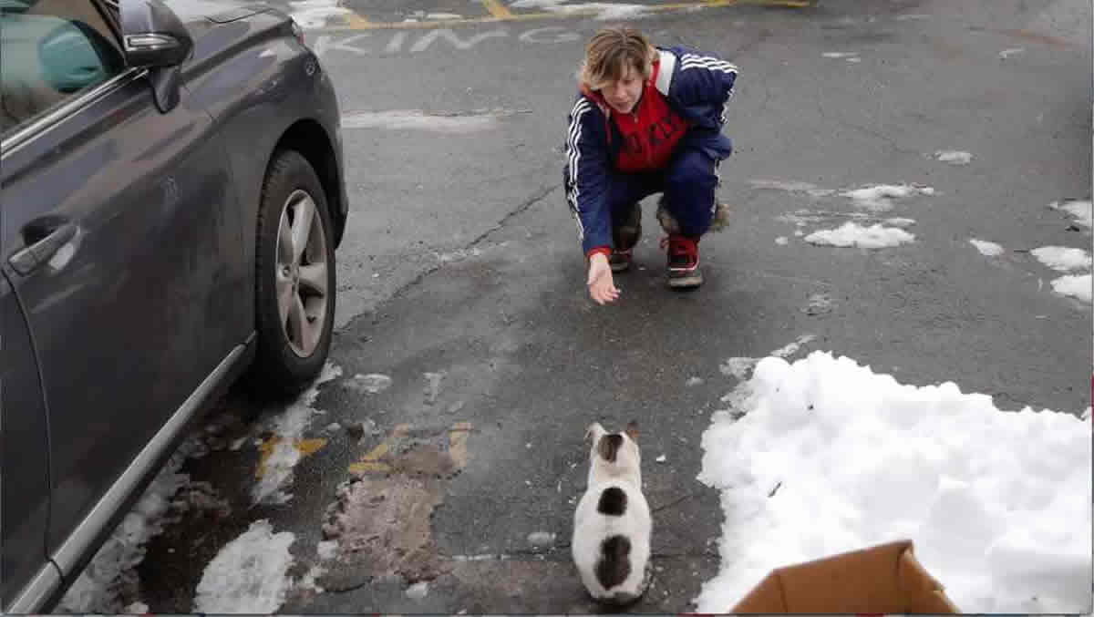 Il trailer di SOS Gatto